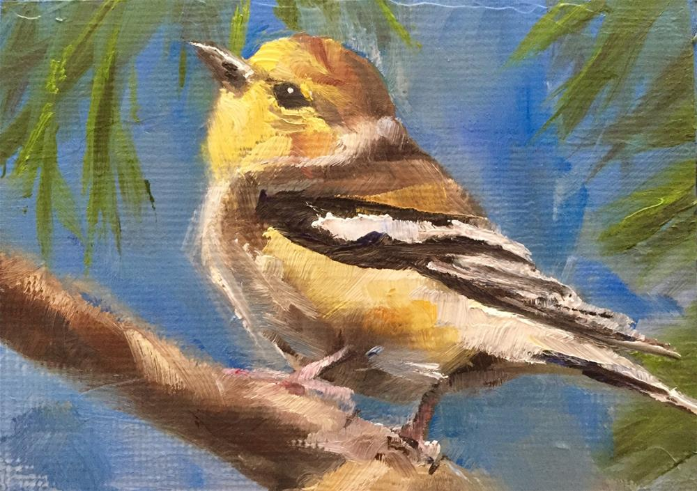 """Finch"" original fine art by Gary Bruton"