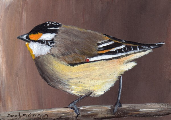 """Striated Pardalote ACEO"" original fine art by Janet Graham"
