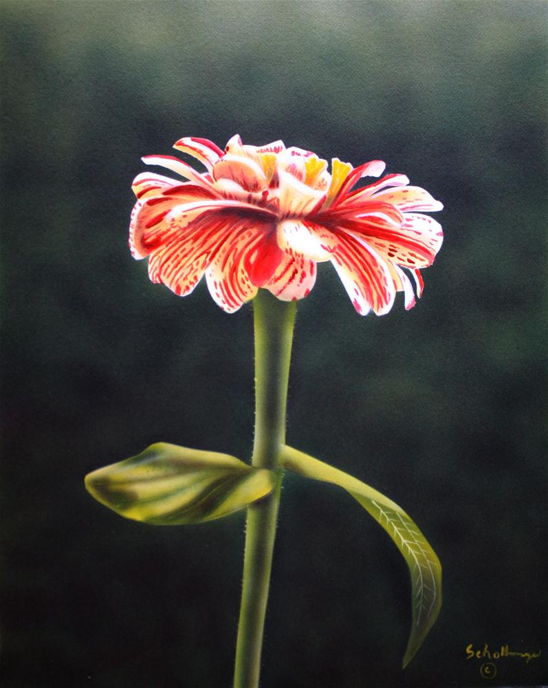 """Candy Stripe Zinnia"" original fine art by Fred Schollmeyer"