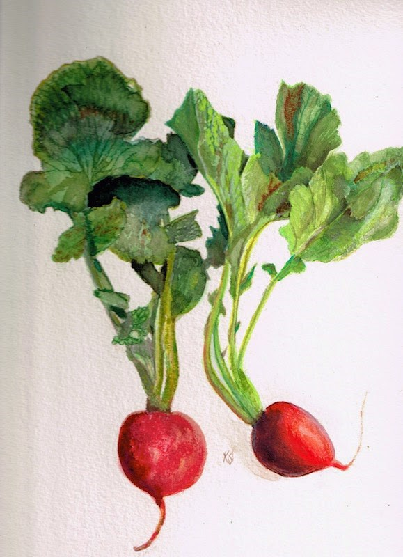 """Radish multiplied"" original fine art by Karen Stitt"