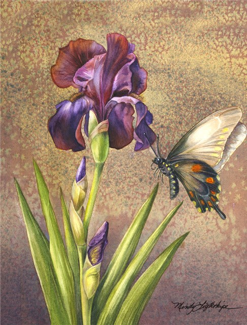 """Study with Mindy Lighthipe, Botanical Fine Art Painting, Iris,Watercolor PURPLE IRIS WITH SWALLOWTA"" original fine art by Mindy Lighthipe"
