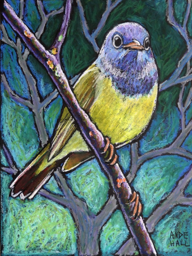 """Connecticut Warbler"" original fine art by Ande Hall"