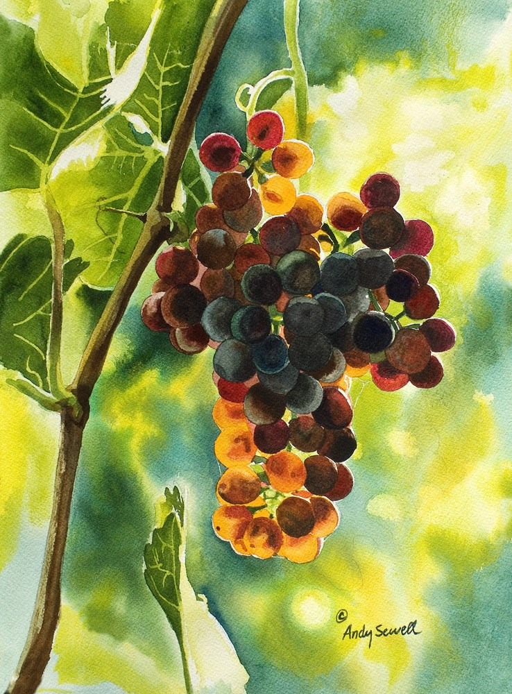 """Red Grapes Glow"" original fine art by Andy Sewell"