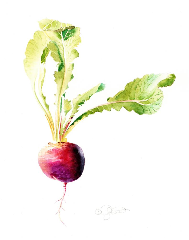 """Purple Easter Egg Radish"" original fine art by Jacqueline Gnott, TWSA, WHS"
