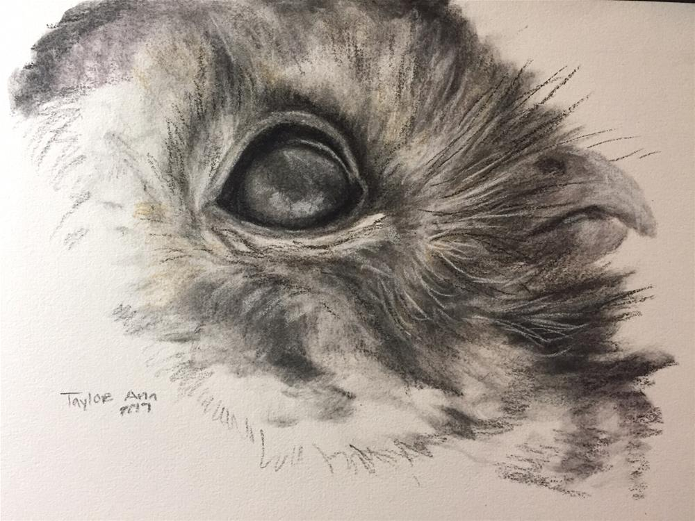 """Owl Profile Quick Study"" original fine art by Taylor Ann"