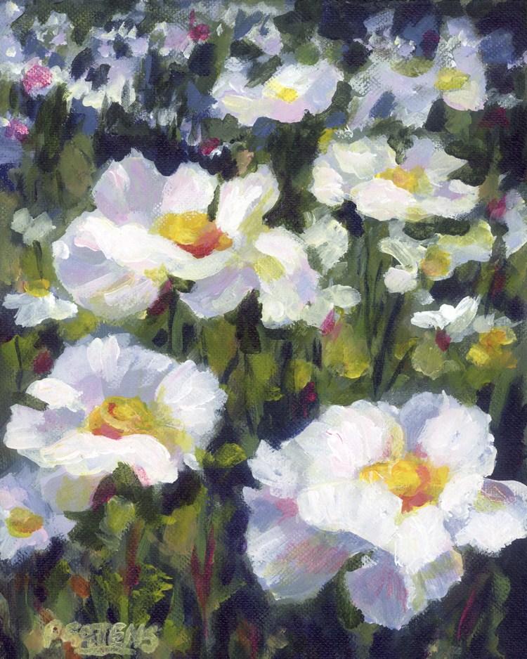 """White Poppy Field"" original fine art by Pamela Gatens"