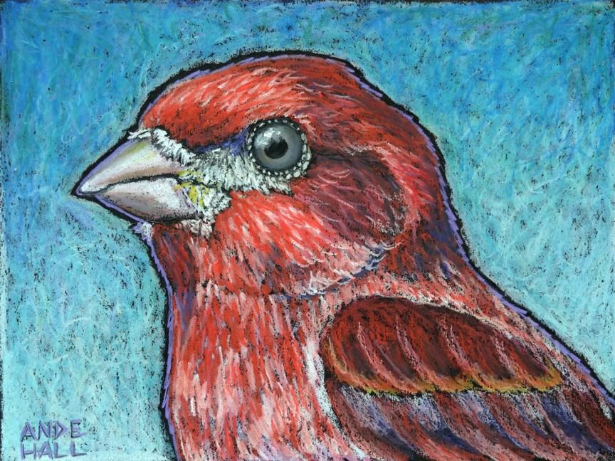 """Purple Finch"" original fine art by Ande Hall"