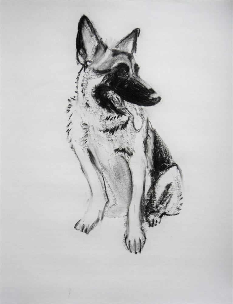 """German Shepherd, sketch"" original fine art by Cindy McDonough"