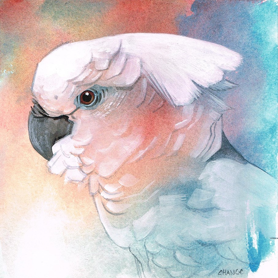 """No. 34 Cockatoo"" original fine art by Annabel Chance"