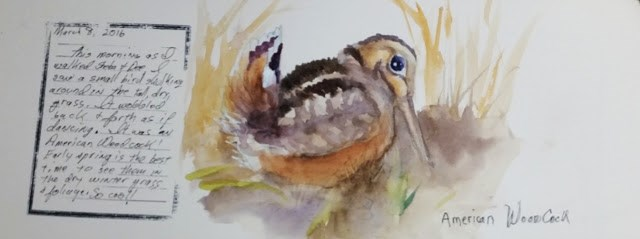 """Nature Journal Woodcock"" original fine art by Wendy Starita"