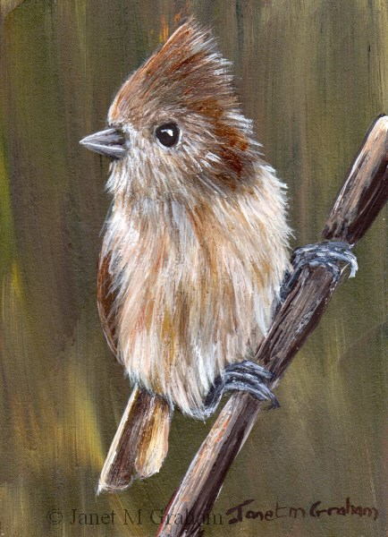 """Oak Titmouse ACEO"" original fine art by Janet Graham"