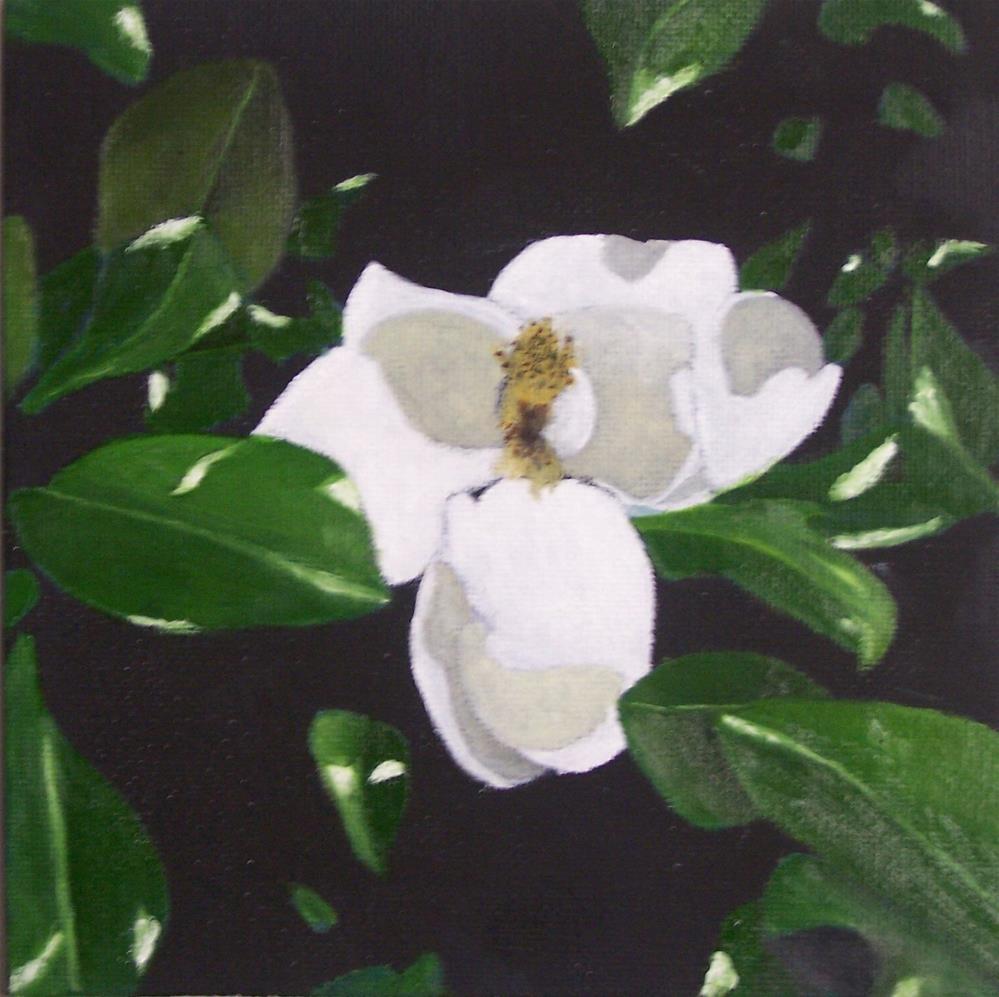 """Magnolia blossom"" original fine art by John Marcum"