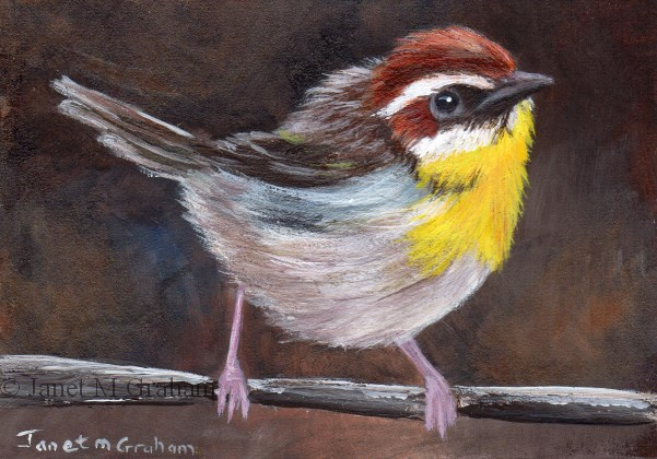 """Rufous Capped Warbler ACEO"" original fine art by Janet Graham"