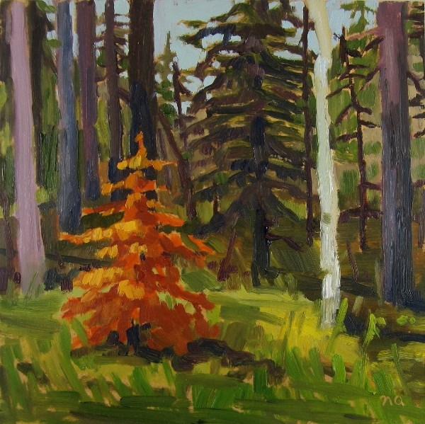 """Little Dead Spruce"" original fine art by Nicki Ault"