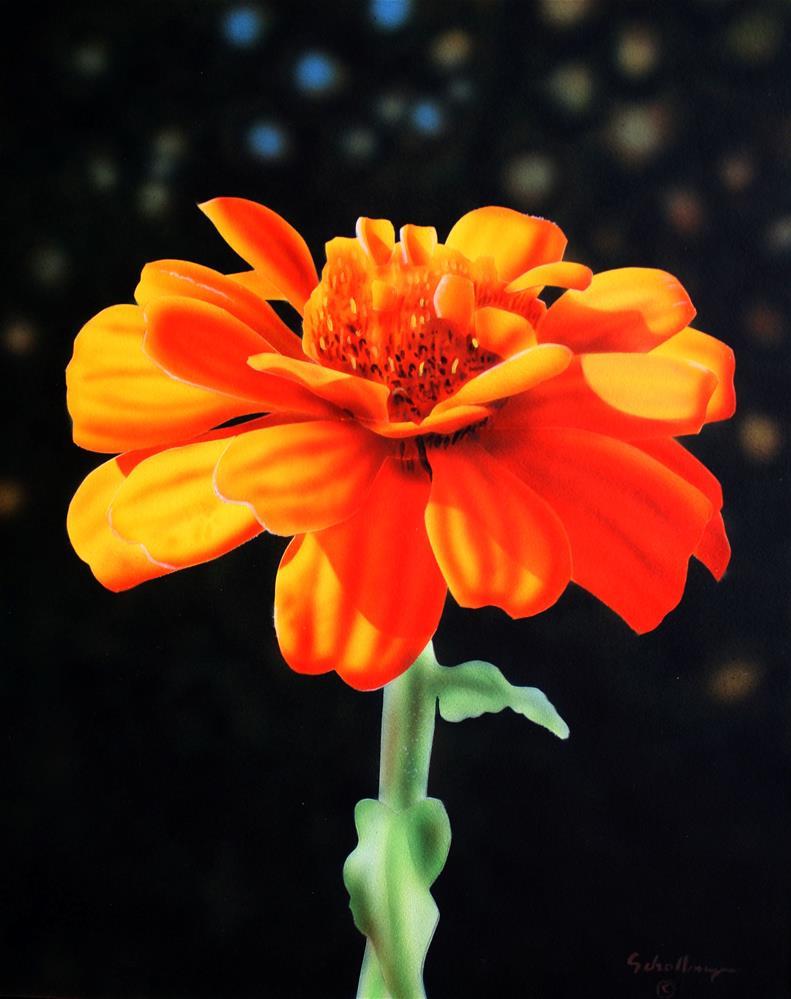 """""""Orange Zinnia"""" original fine art by Fred Schollmeyer"""