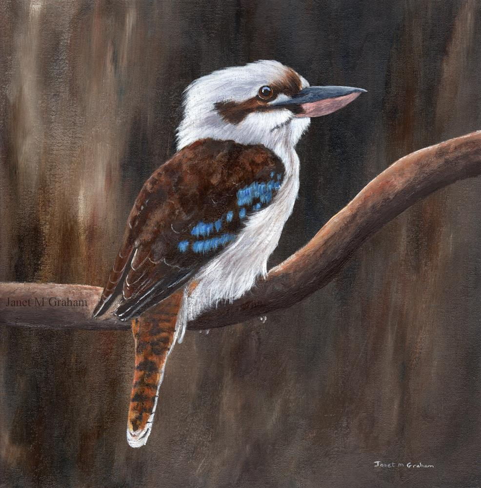 """Laughing Kookaburra"" original fine art by Janet Graham"