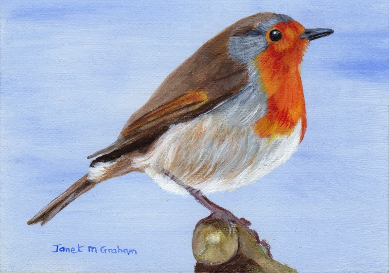 """Robin 3 ACEO"" original fine art by Janet Graham"