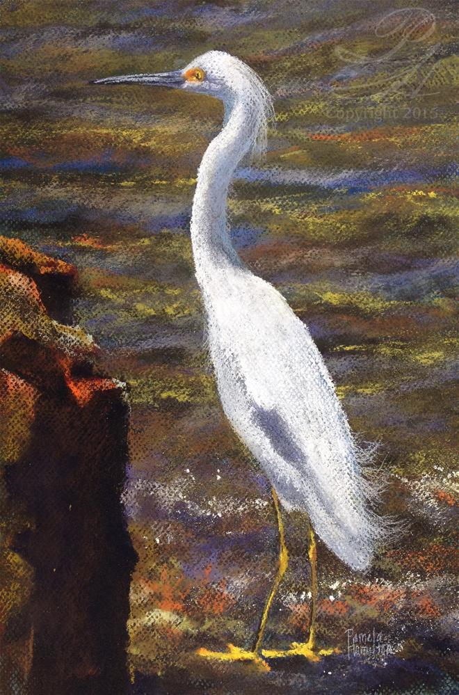 """Snowy Egret"" original fine art by Pamela Hamilton"