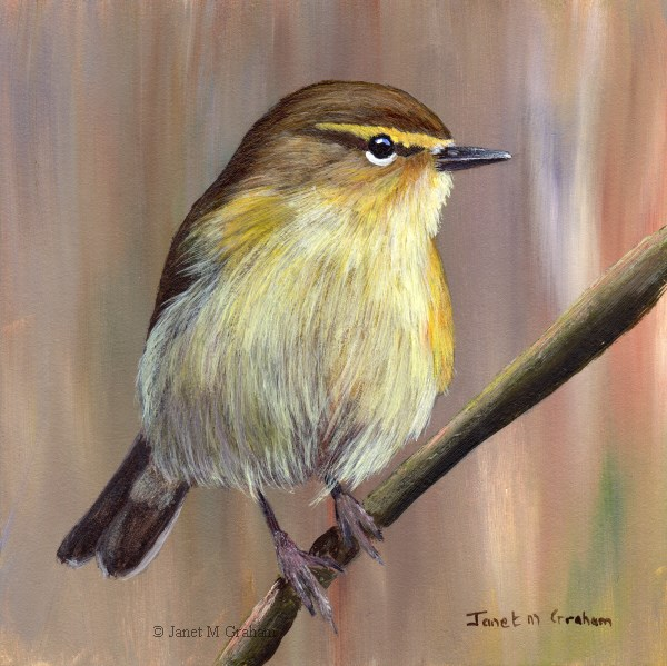 """Common Chiffchaff"" original fine art by Janet Graham"