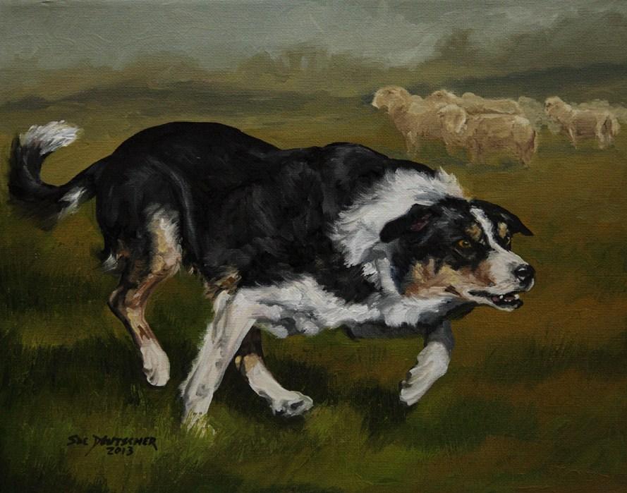"""""""Border Collie 130224"""" original fine art by Sue Deutscher"""