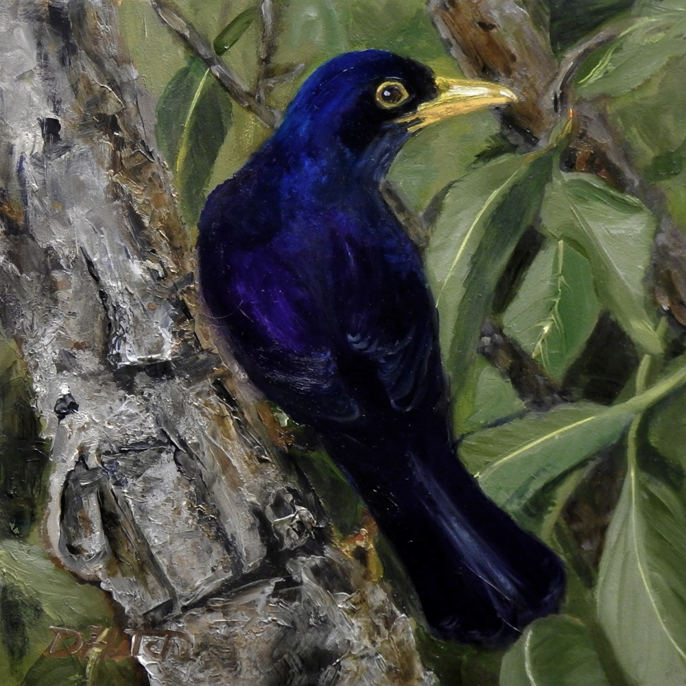 """Blackbird"" original fine art by Diane Hutchinson"