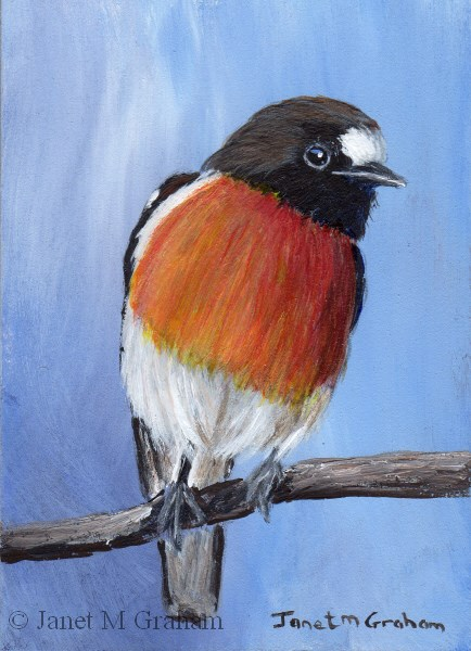"""Scarlet Robin ACEO"" original fine art by Janet Graham"