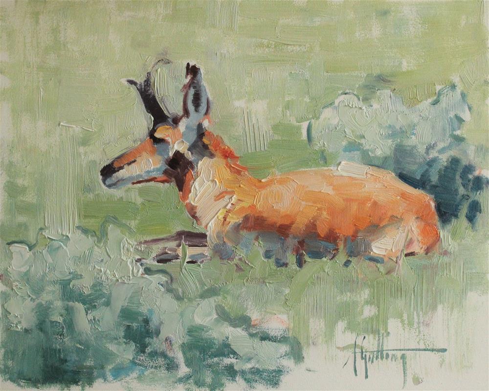 """Antelope Study #3"" original fine art by Abigail Gutting"