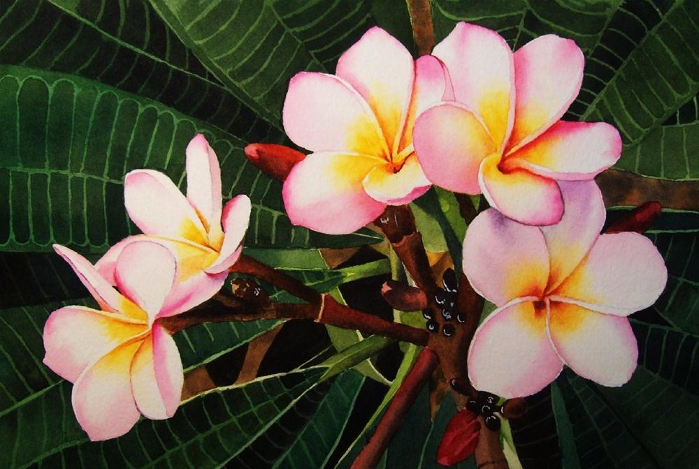 """Plumeria"" original fine art by Jacqueline Gnott, whs"
