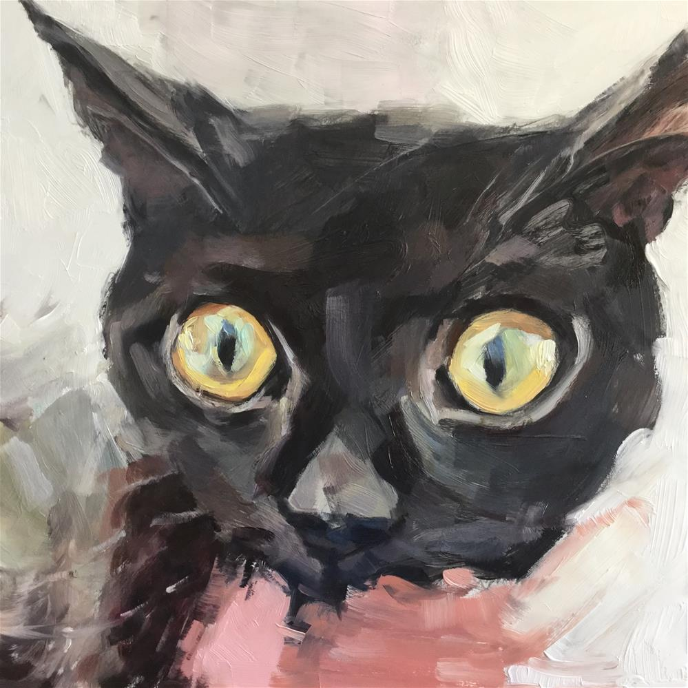 """Black Cat Stare"" original fine art by Paula Howson-Green"