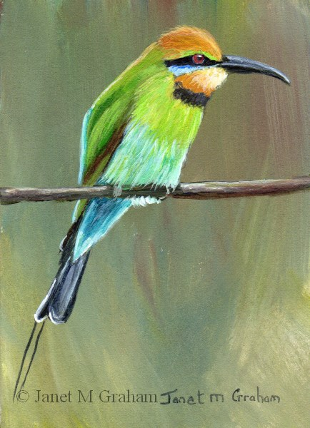 """Rainbow Bee Eater ACEO"" original fine art by Janet Graham"