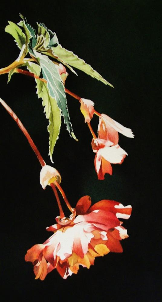 """Trailing Begonia"" original fine art by Jacqueline Gnott, whs"