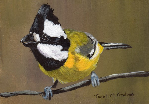 """Crested Shrike Tit ACEO"" original fine art by Janet Graham"