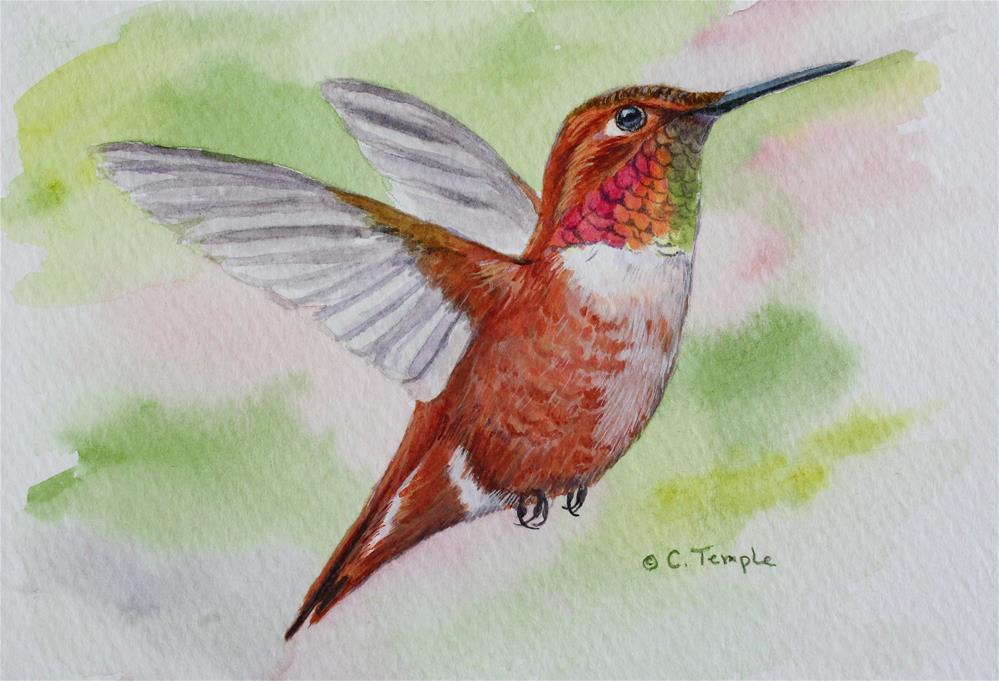 """Rufous Hummingbird"" original fine art by Catherine Temple"