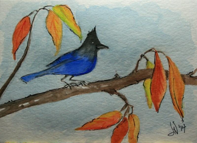 """Steller's Jay in Autumn"" original fine art by Jean Nelson"