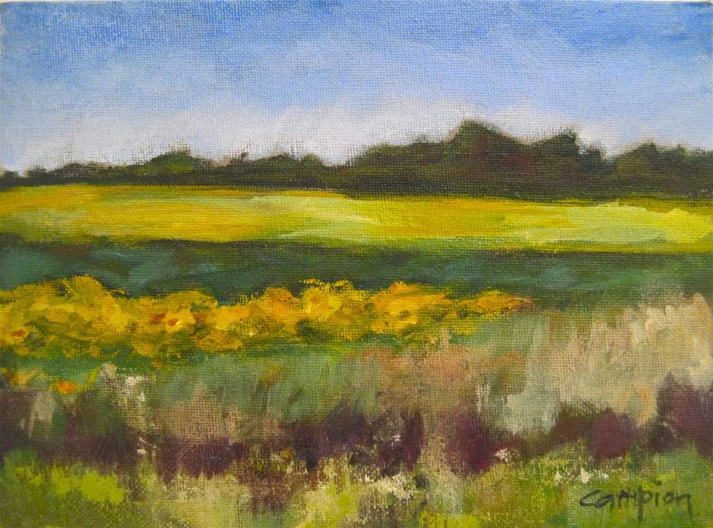 """493 Field of Sunflowers"" original fine art by Diane Campion"