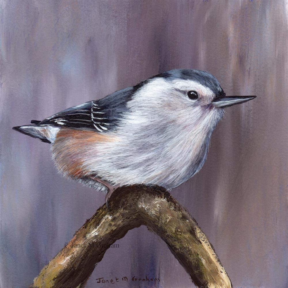 """White Breasted Nuthatch"" original fine art by Janet Graham"