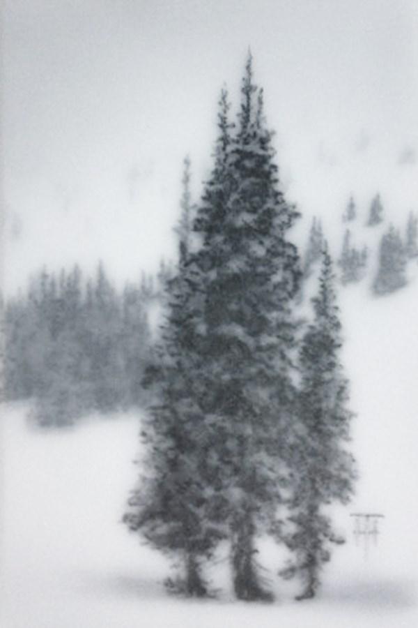 """""""Mountain Spruce IV"""" original fine art by Terri Heinrichs"""