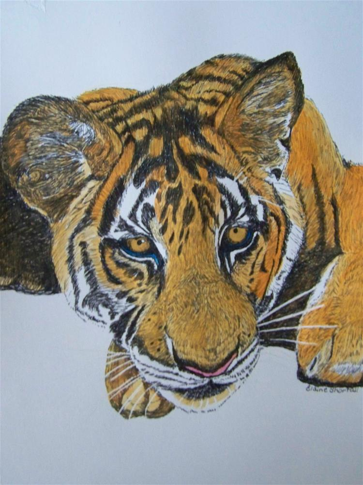 """Tiger Cub"" original fine art by Elaine Shortall"