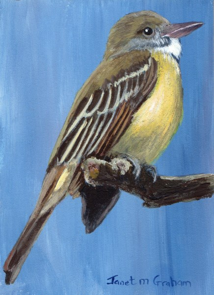"""Great Crested Flycatcher ACEO"" original fine art by Janet Graham"