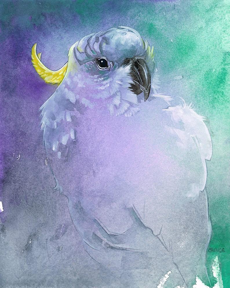 """No. 17 Cockatoo"" original fine art by Annabel Chance"