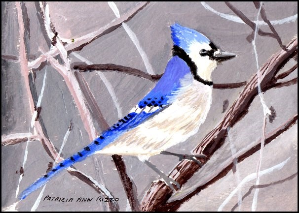 """Happy Blue Jay"" original fine art by Patricia Ann Rizzo"