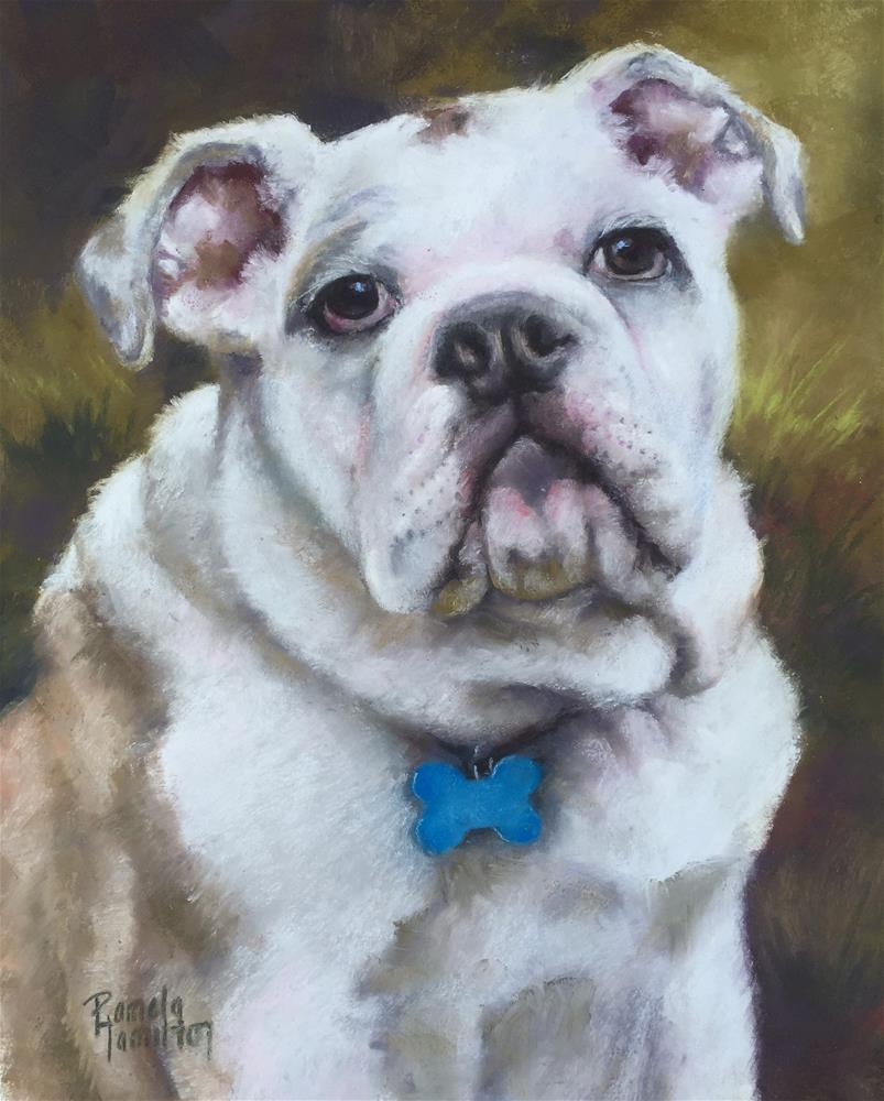 """Bulldog Pup"" original fine art by Pamela Hamilton"