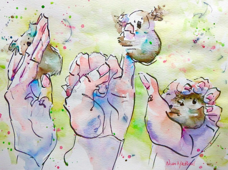"""hand studies with Bibo"" original fine art by Nora MacPhail"