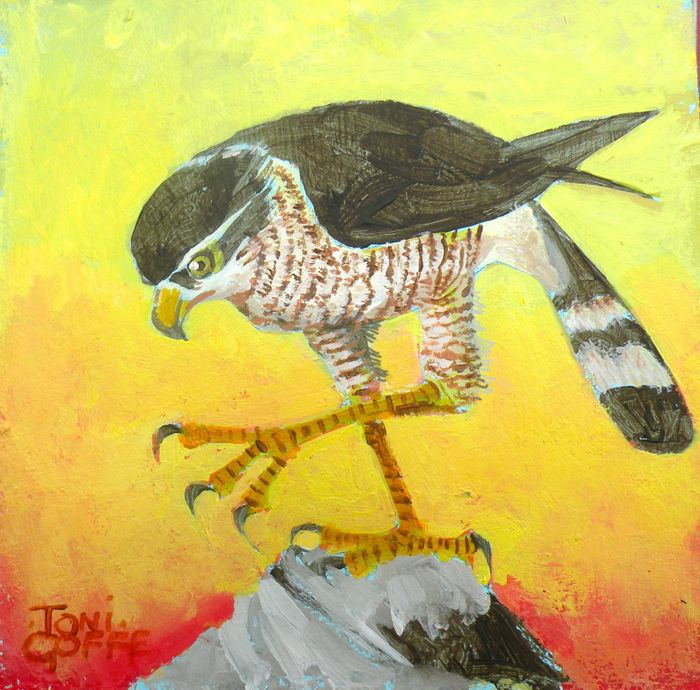 """Sparrowhawk"" original fine art by Toni Goffe"