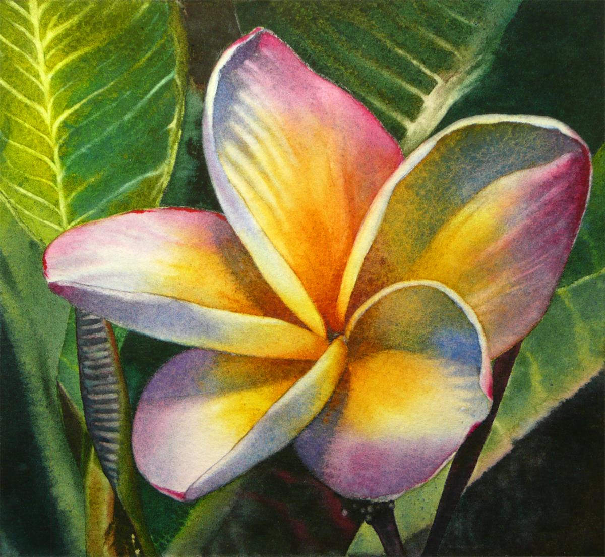 """Blushing Plumeria"" original fine art by Arena Shawn"