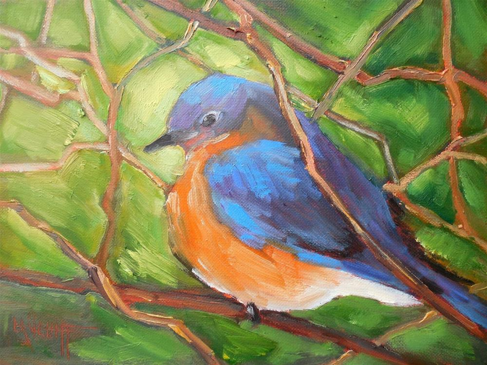 """Wildlife Painting, Bird Painting, Daily Painting, Small Oil Painting, Bluebird by Carol Schiff, 6x"" original fine art by Carol Schiff"