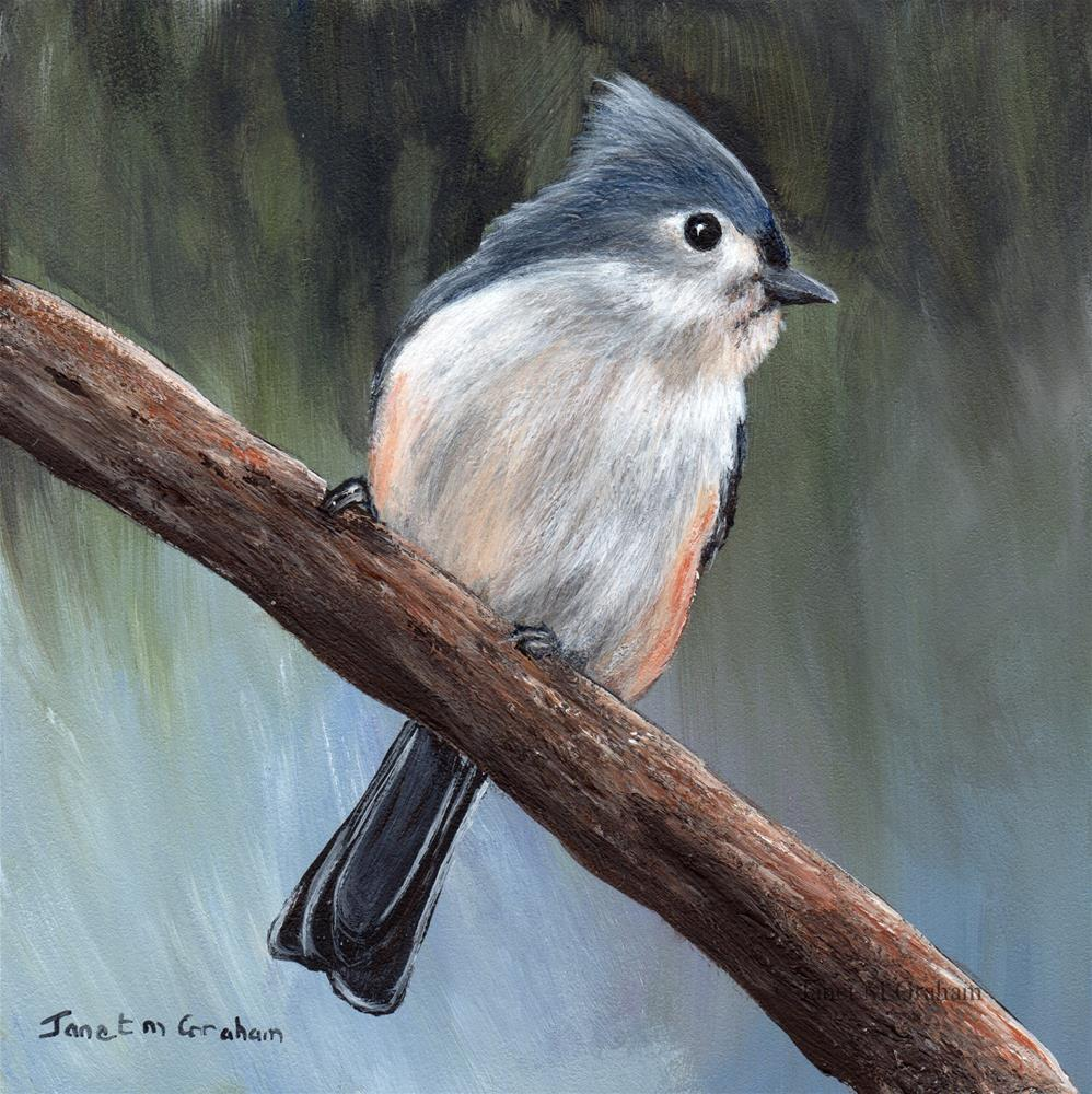 """Tufted Titmouse No 4"" original fine art by Janet Graham"