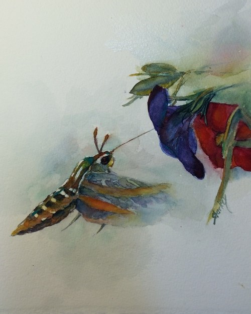 """""""Hummingbird Moth"""" original fine art by Ann Sharkey"""