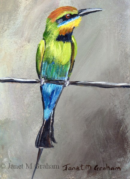 """Rainbow Bee - Eater ACEO"" original fine art by Janet Graham"
