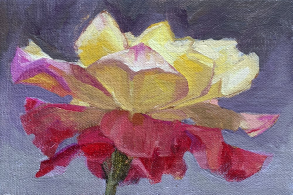 """Rose"" original fine art by Miriam Hill"